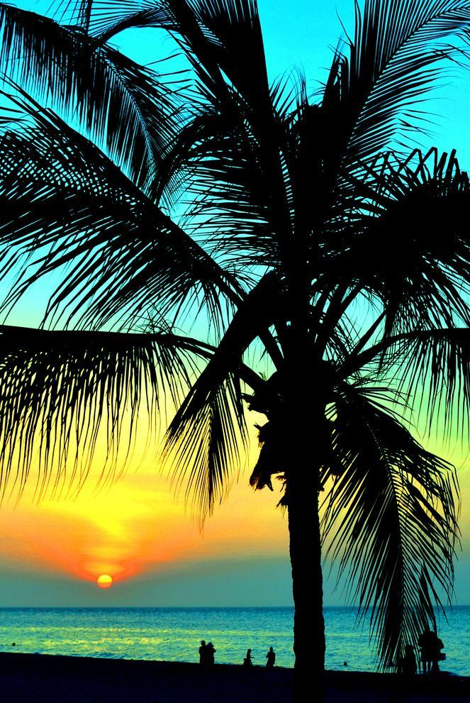 Palm Trees Blue Ocean Sunsets On The Beach