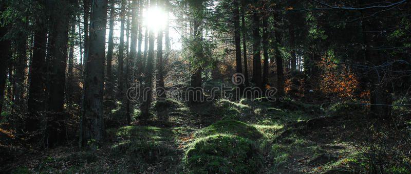 Dark Forrest Dark Forest At Sunrise In Romania Sponsored Forrest Dark Forest Romania Sunrise Ad Dark Forrest Photo Dark Forest