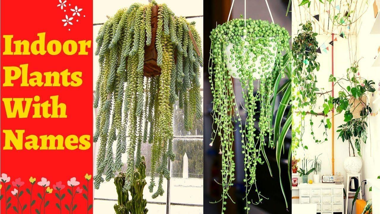 Hanging Indoor Plants Low Light