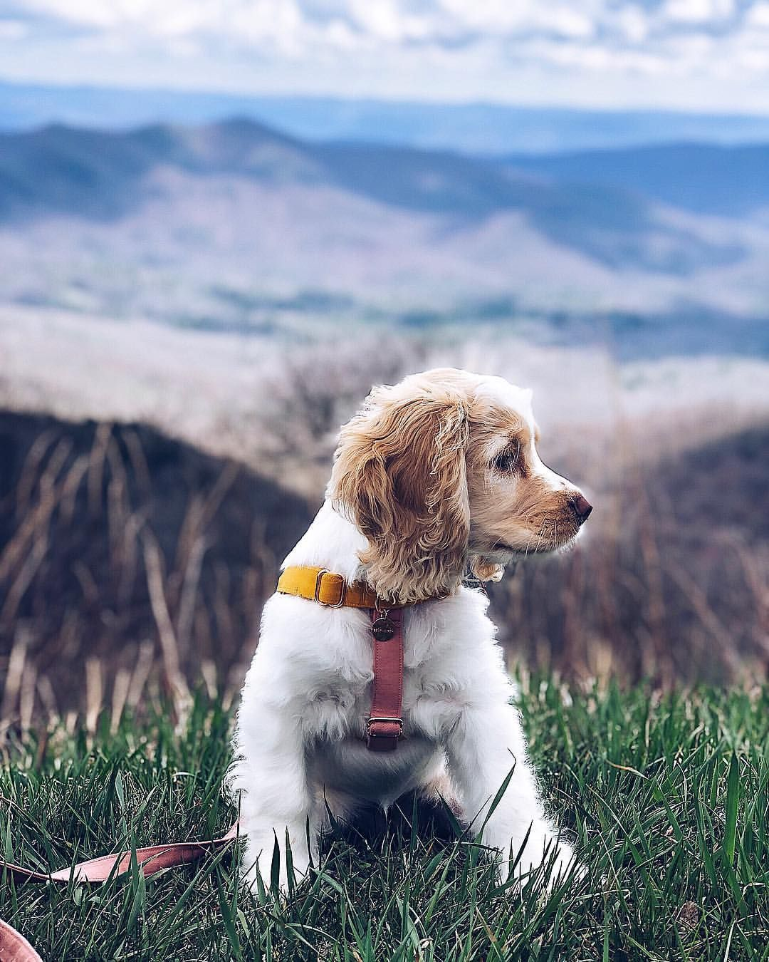 Puppy S First Hike Asheville Nc Beautiful Outdoor Dog Dogs Dog Adventure