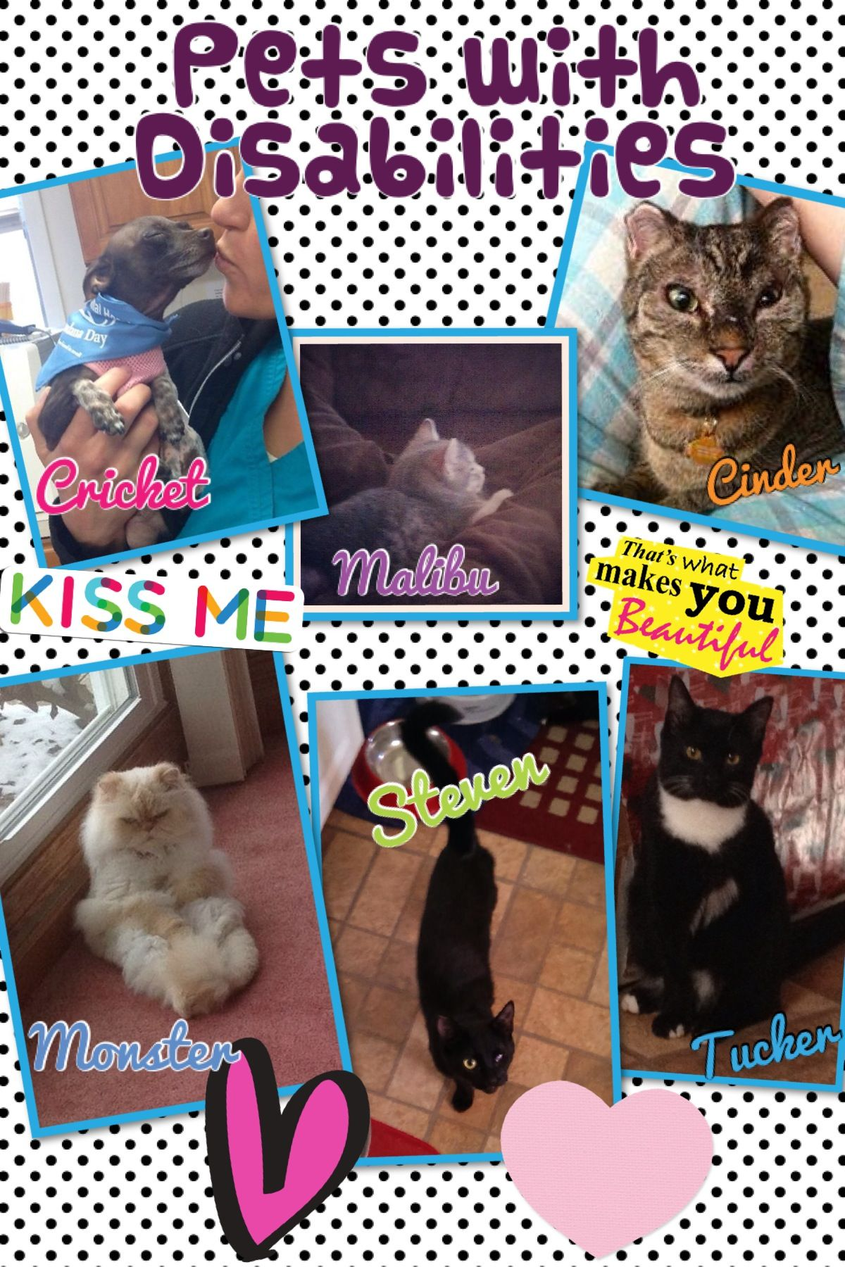 Today Is National Pets With Disabilities Day In Honor Of Today We Wanted To Share Photos Of Some Skah Pets With Disab Animal Hospital Pet Clinic Love Your Pet