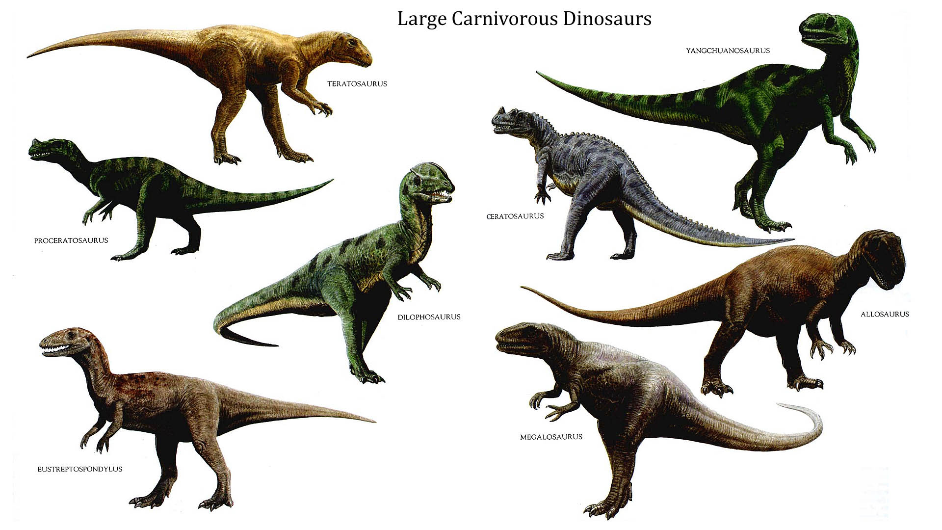 carnivorousdinosaurs.jpg 1,920×1,080 pixels Prehistoric