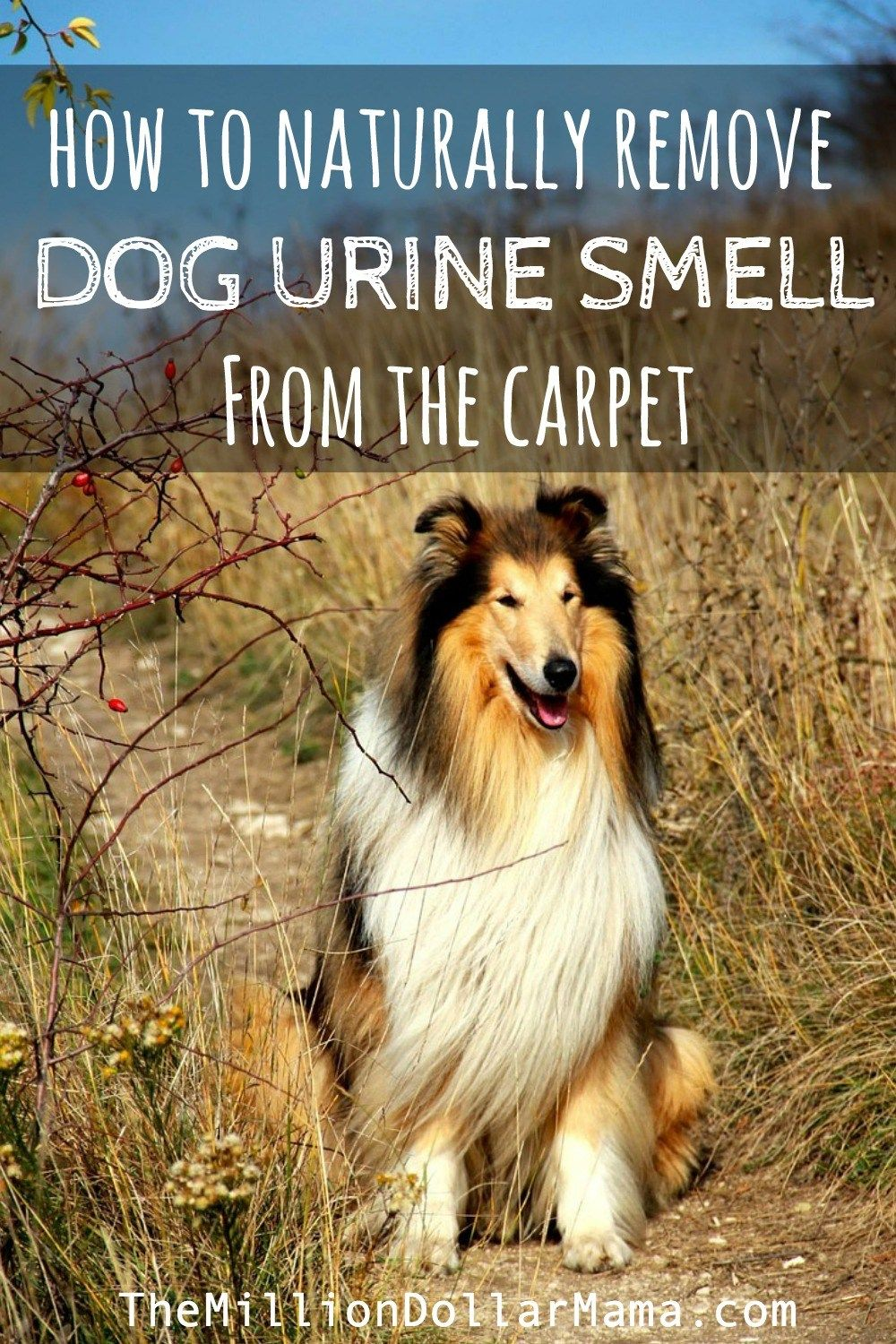 How To Naturally Remove Dog Urine Smell From The Carpet