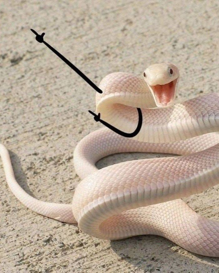 Snakes With Arms Drawn On Make The World A Better Place