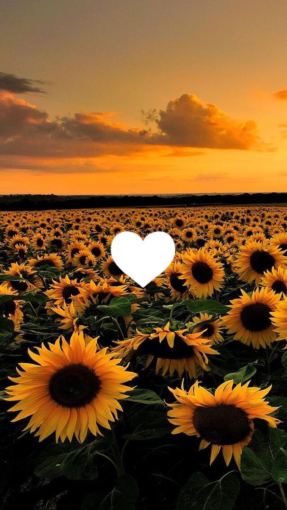 30 Super Pretty Sunflower Iphone Wallpapers Crushappy Blog Iphone Great Pretty Wal Sunflower Iphone Wallpaper Cute Tumblr Wallpaper Sunflower Wallpaper