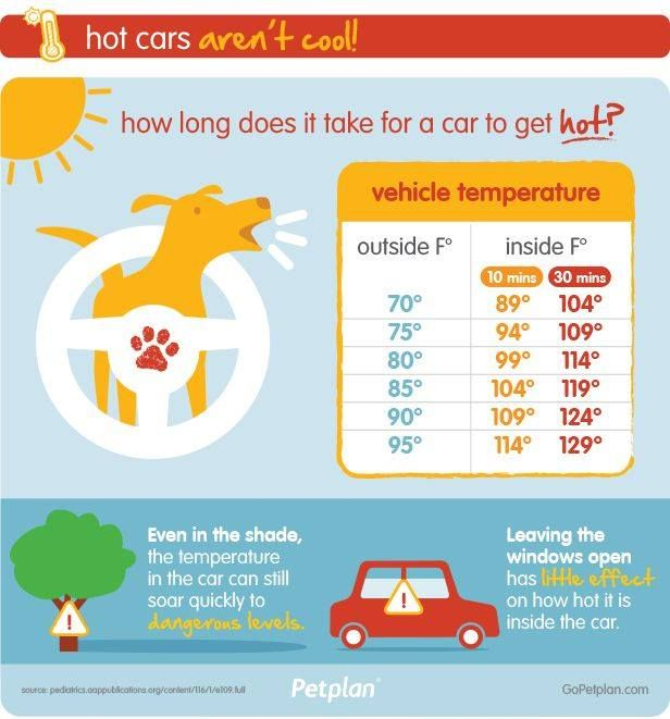 Click For Free Printable Handouts One Of The Infographics From Petplan Which Summer Safety Tips Pet Safety Pet Insurance Reviews