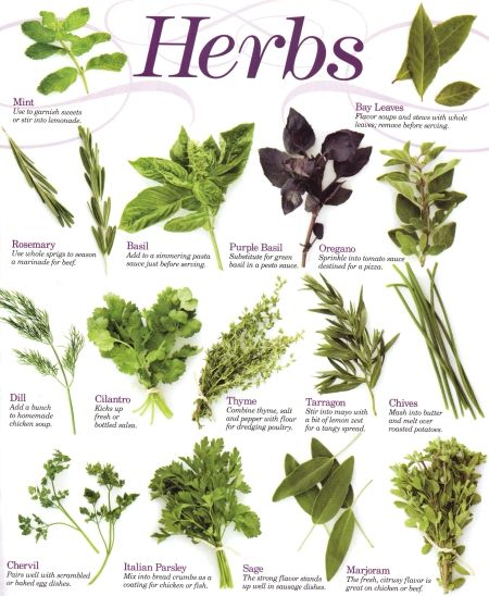 Herbs and their uses – Herb Garden Plants