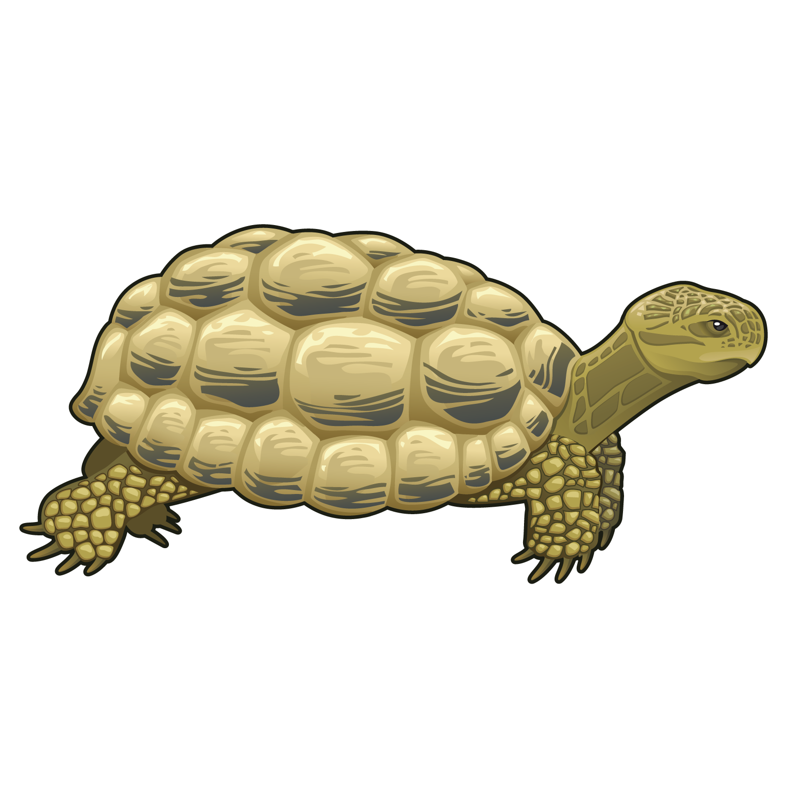 Drawing Turtle Turtle Png Image And Clipart Turtle Clip Art Drawings