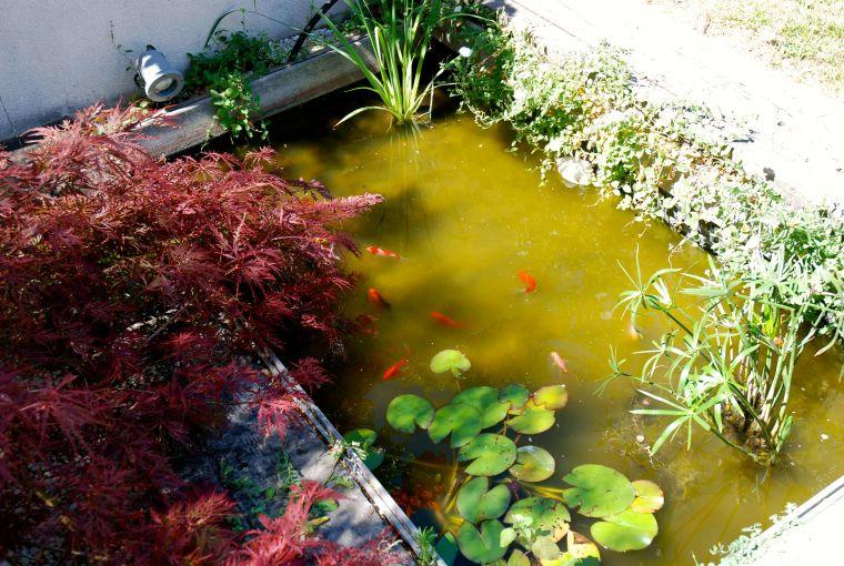 Un estanque en mi jardín Pinterest Estanques, Plantas acuaticas