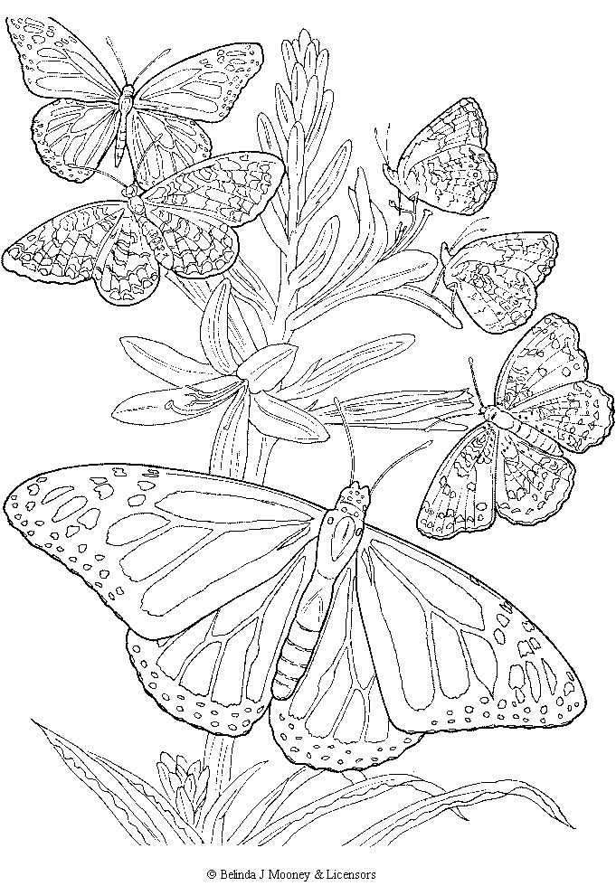 free printable adult butterfly coloring page - Printable Butterfly Coloring Pages 2
