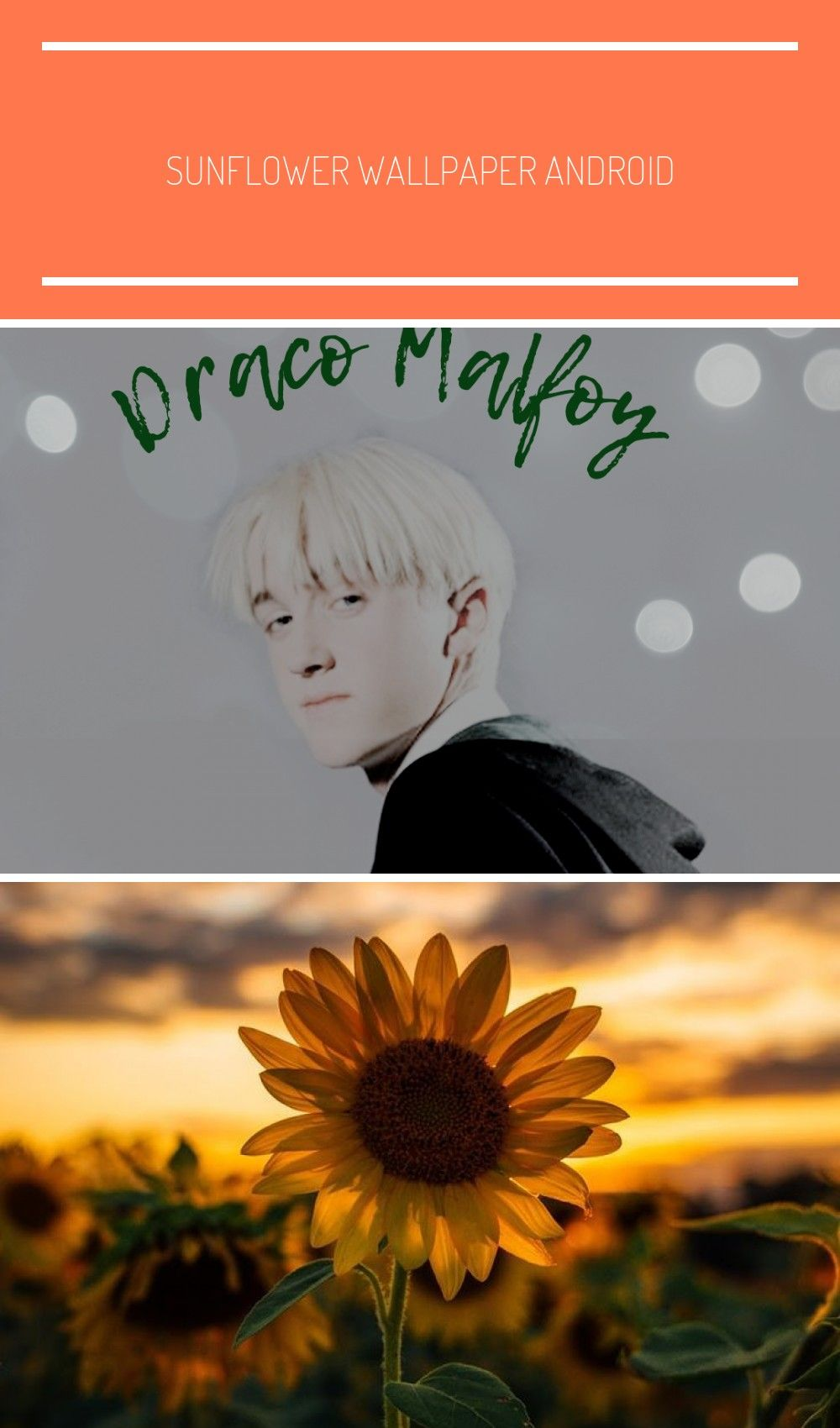 Draco Malfoy Wallpapers Tumblr Sunflower Wallpaper Wallpaper Draco Malfoy