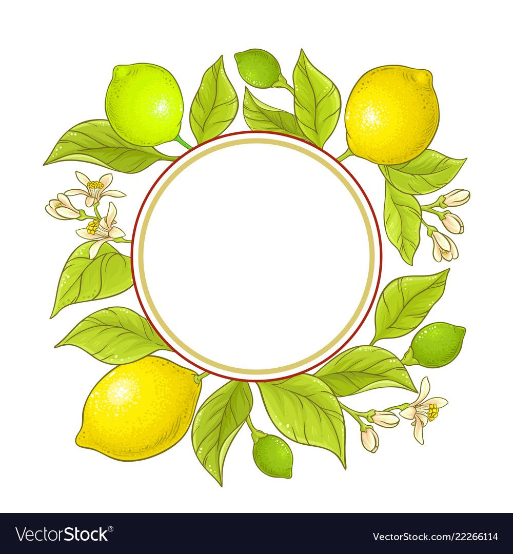 Lemon branch frame vector image on VectorStock Vector