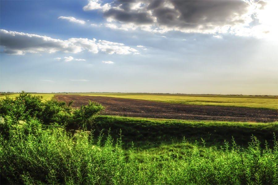 One plowed field between two grain fields