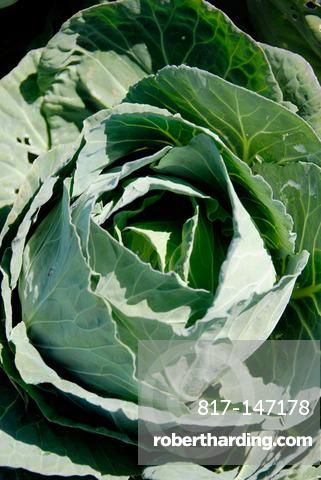 Green Cabbage Fresh Vegetable Produce and Fruit Truck