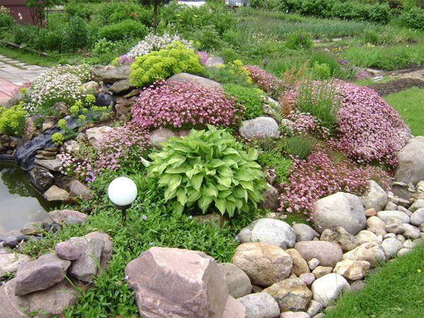Растения для альпийские горки на даче своими руками