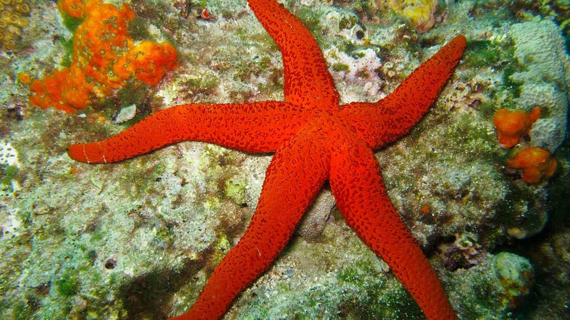 Sea Star | Pinterest | Star