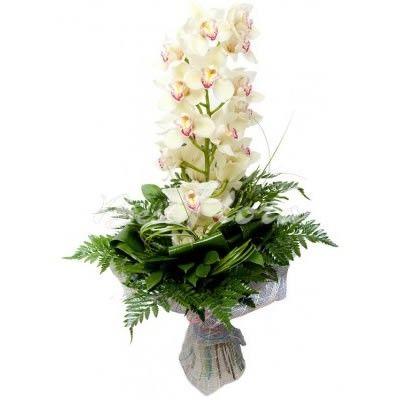 Букет из 7 орхидей цена — photo 12