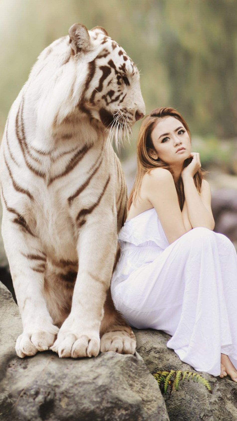 Asian Model With White Tiger Photoshoot 4k Ultra Hd Mobile Wallpaper White Tiger Tiger Love Tiger