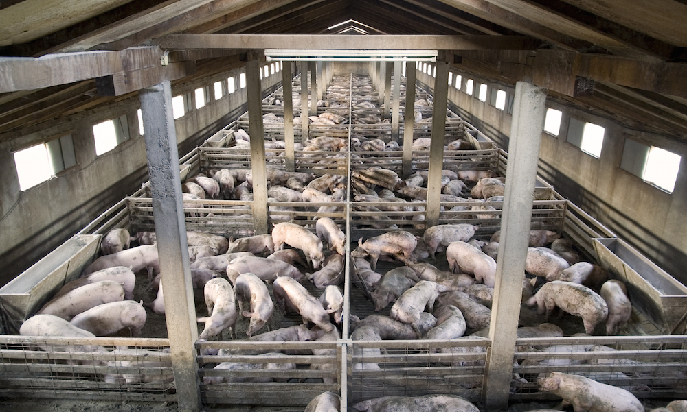 What's the role of factory farming in ocean degradation? - Mission