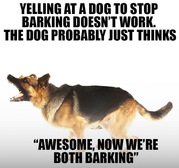 how to get your dog to stop barking dog memes dog humor training dogs