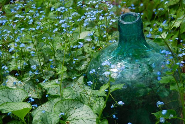 Brunnera 'Jack Frost' with a blue glass jug... so cute.