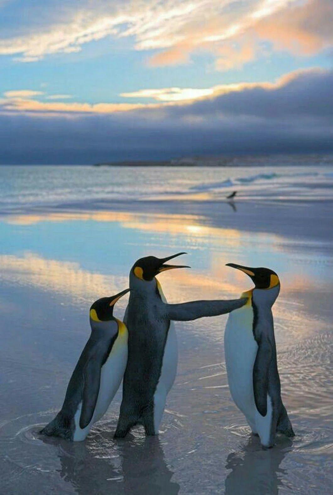 Доброе утро в январе с пингвинами картинки
