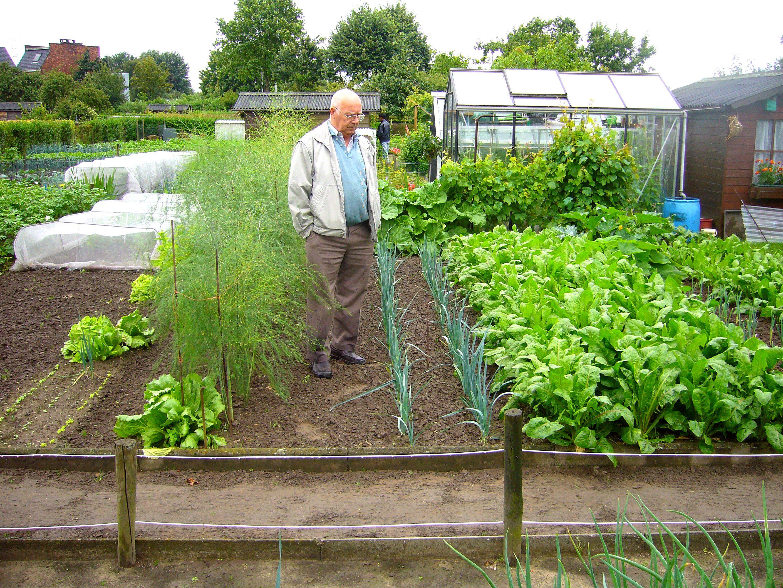 Etonnant Organic Vegetable Gardens (Vegetable Garden Guide)