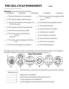 Cell Division And The Cell Cycle Worksheet - cell division and the ...