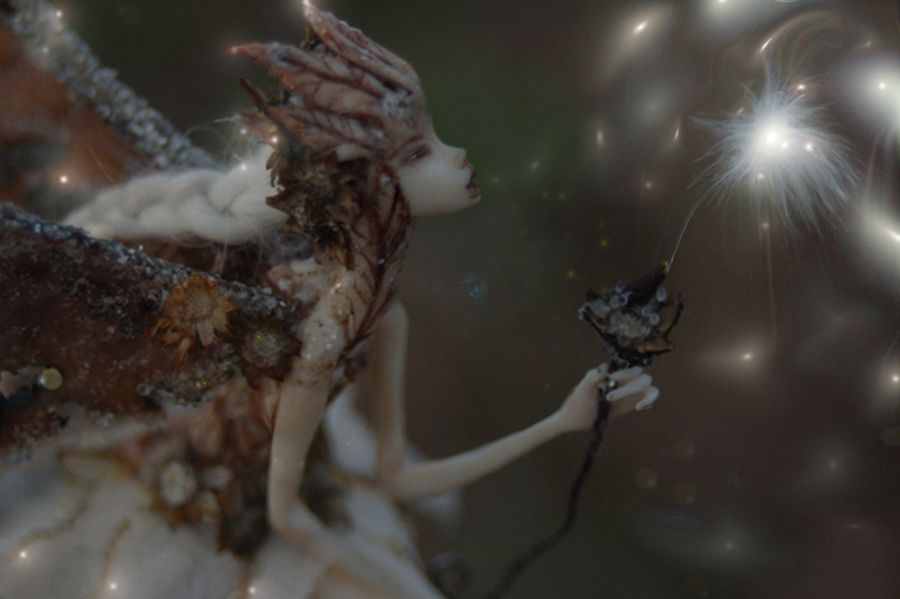 ~The milkweed seed is a legendary carrier of wishes and dreams, as is twilight, the hour when the world is blue, a time of magic... ~  by chicorydell.deviantart.com on @deviantART