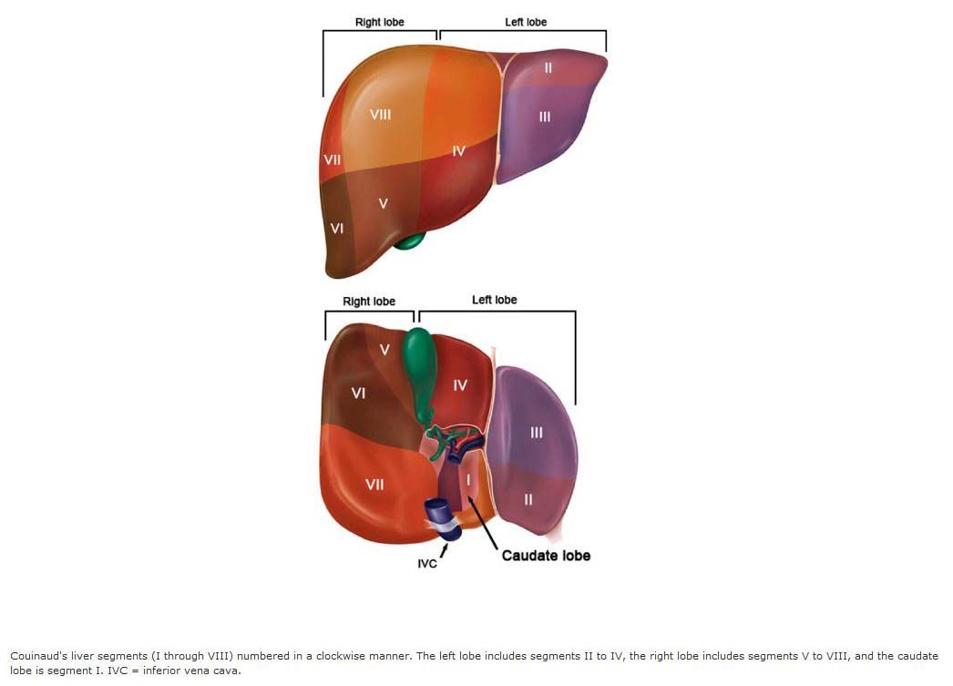 Liver Segments-Couinaud | Pinterest | Radiology
