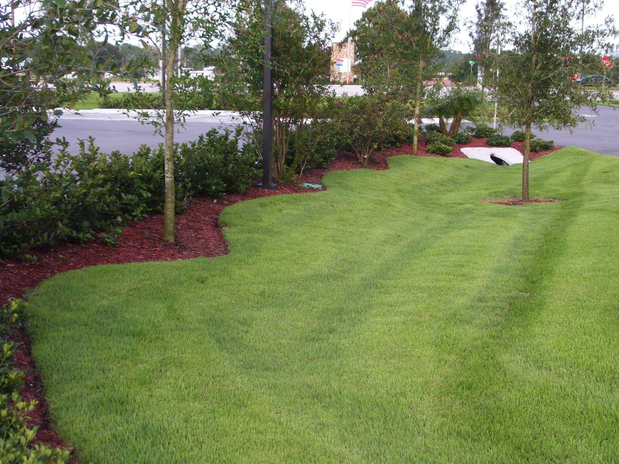 El Toro Zoysia Grass For Sale Near Me