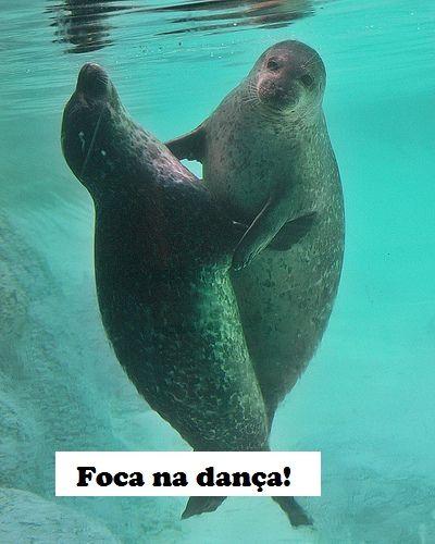 Think Foca Bebe Criaturas Marinhas Foca