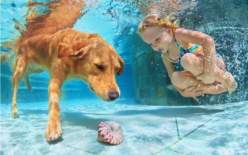 Best Dog Pool For Labradors And Other Large Breeds Dog Swimming Dog Pool Dog Swimming Pools