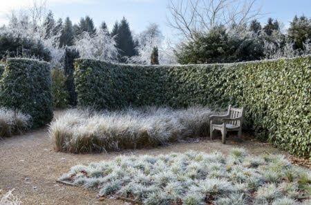 Elaeagnus macrophylla hedge winterharte immergr ne for Pflanzengestaltung garten