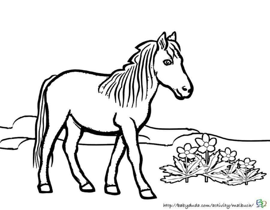 Pferdebilder Ausmalen Pferdekopfe Ausmalbilder Babyduda Malbuch Malvorlagen Pferde Ausmalen Pferdebilder