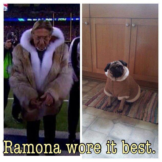 Ramona Wore It Best Pug Coat Pug Style Coat Pugs Fur Coat
