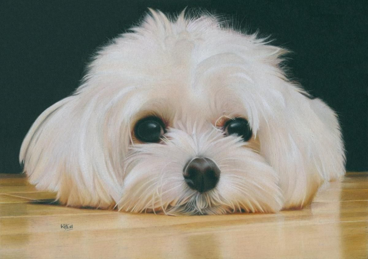 White Dog In Colored Pencil On Mat Board Bluprint In 2020 Dog Art White Dogs Dog Paintings
