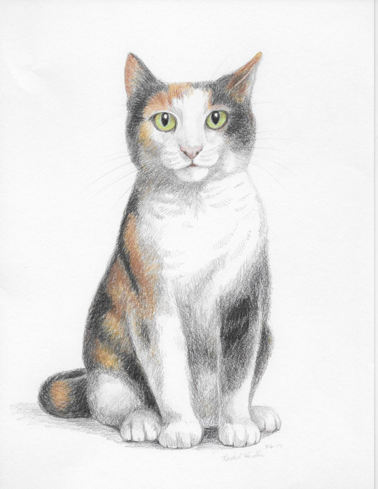 Calico Cat Coloring Page Youngandtae Com In 2020 Cat Coloring Page Cat Colors Tabby Cat