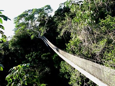 Canopy Walkway near Iquitos Peru & Canopy Walkway near Iquitos Peru | places iu0027d like to climb ...