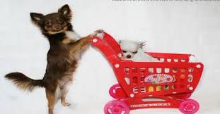Image result for thank you chihuahua