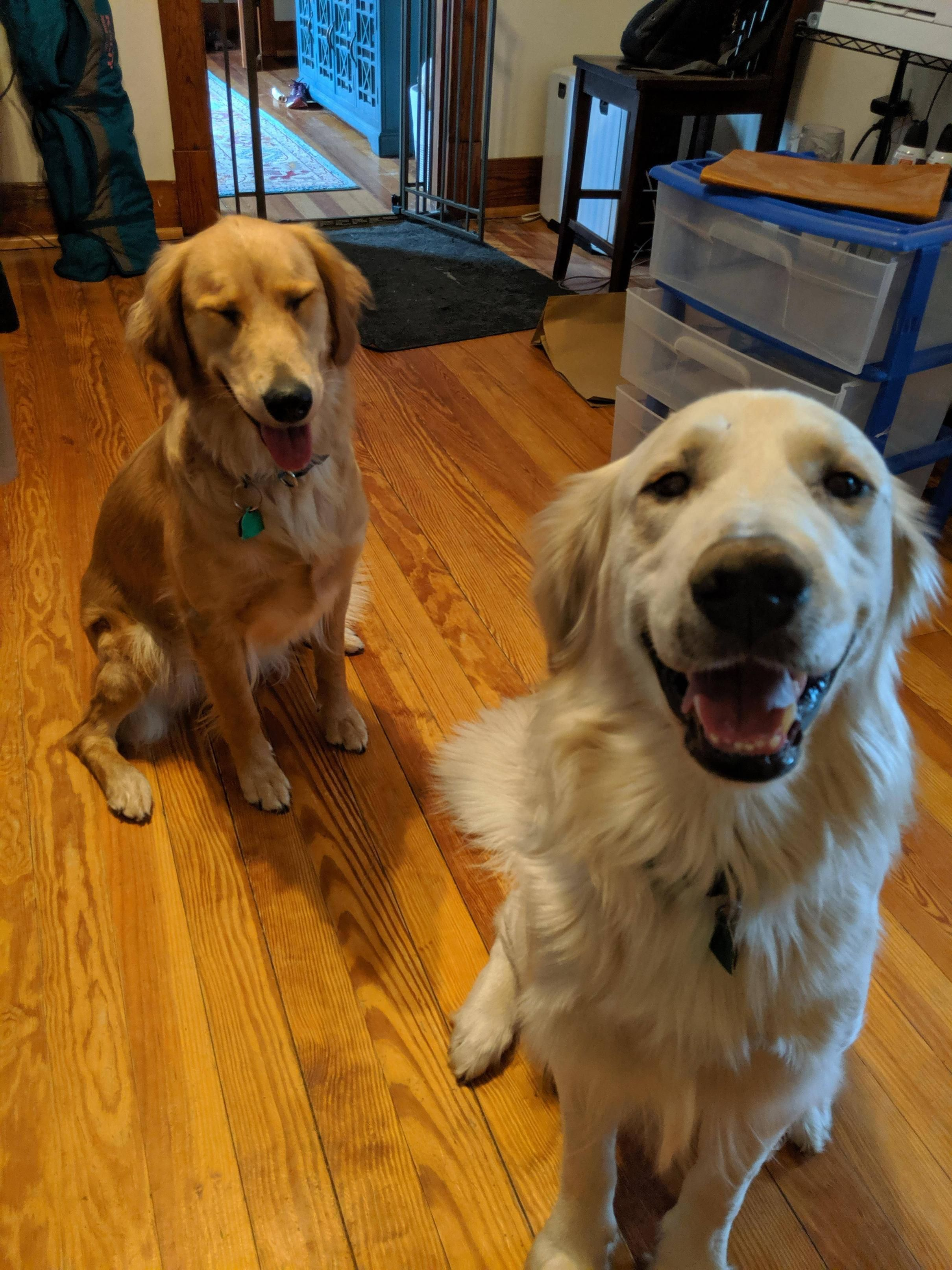 Have You Ever Captured A Blink With Images Golden Retriever