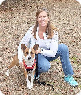Camden Sc Corgi Collie Mix Meet Amber A Dog For Adoption