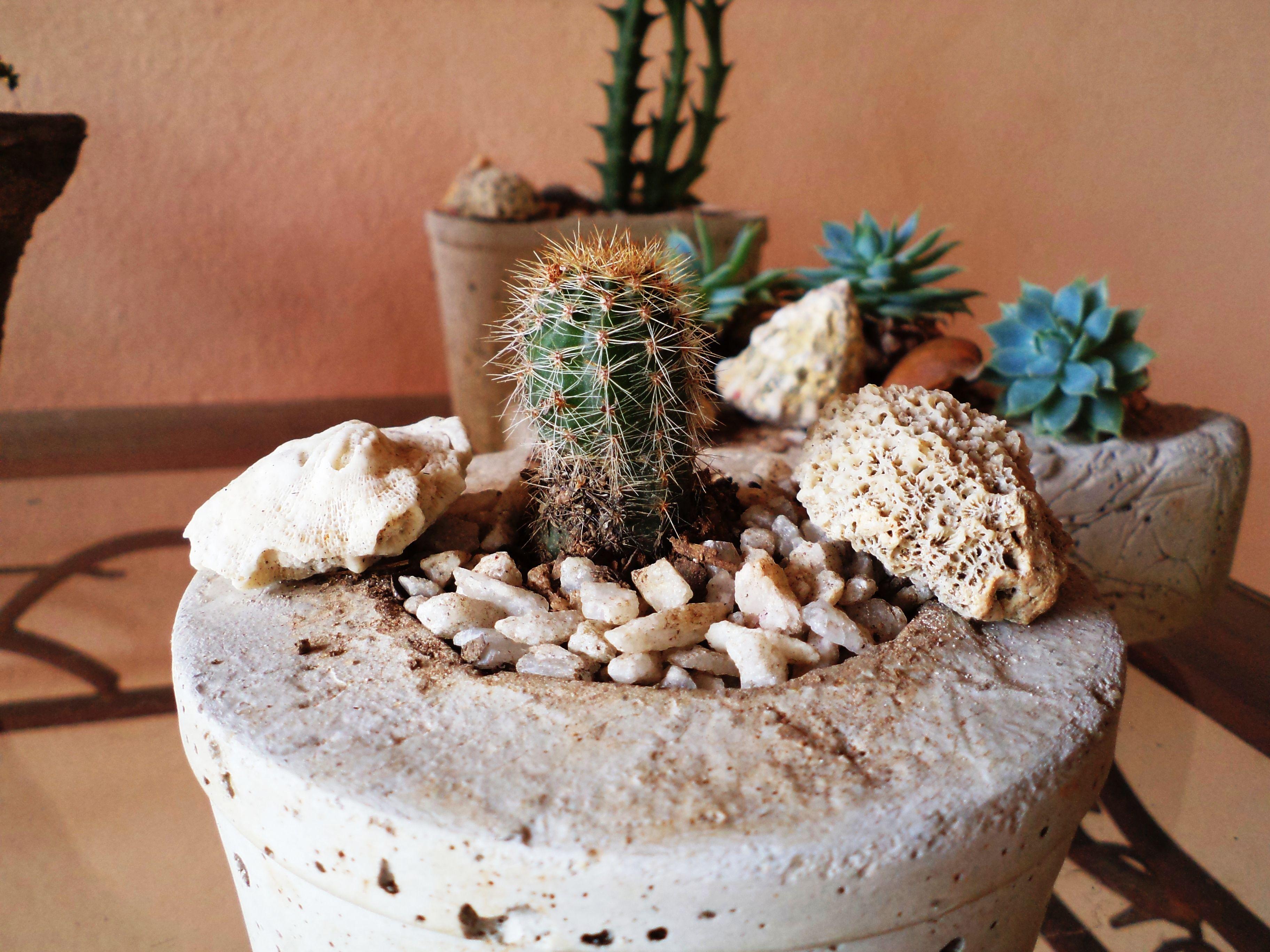 Jardim de suculenta em vaso de cimento.