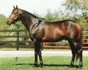 Lord Avie(1978)(Colt) Lord Gaylord- Avie By Gallant Man. 4(C)x5(C) To Lavendula, 5(F)x5(F) To Mah Mahal. 16 Starts 8 Wins 4 Seconds 4 Thirds. $705,977. Won Florida Derby(G1), Champagne S(G1), Young America S(G1), Cowdin S(G2), Juvenile S, Hutcheson S. Champion 2 YO Colt In U.S. In 1980. Died In 2012.