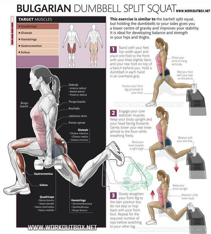 #bulgarian #exercises #dumbbell #favorite #mobility #strength #squat #split #ideas #used #one #can #...