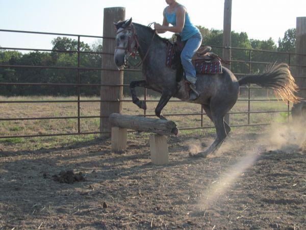 Bonnie Blu for sale, A Great All-around Pony