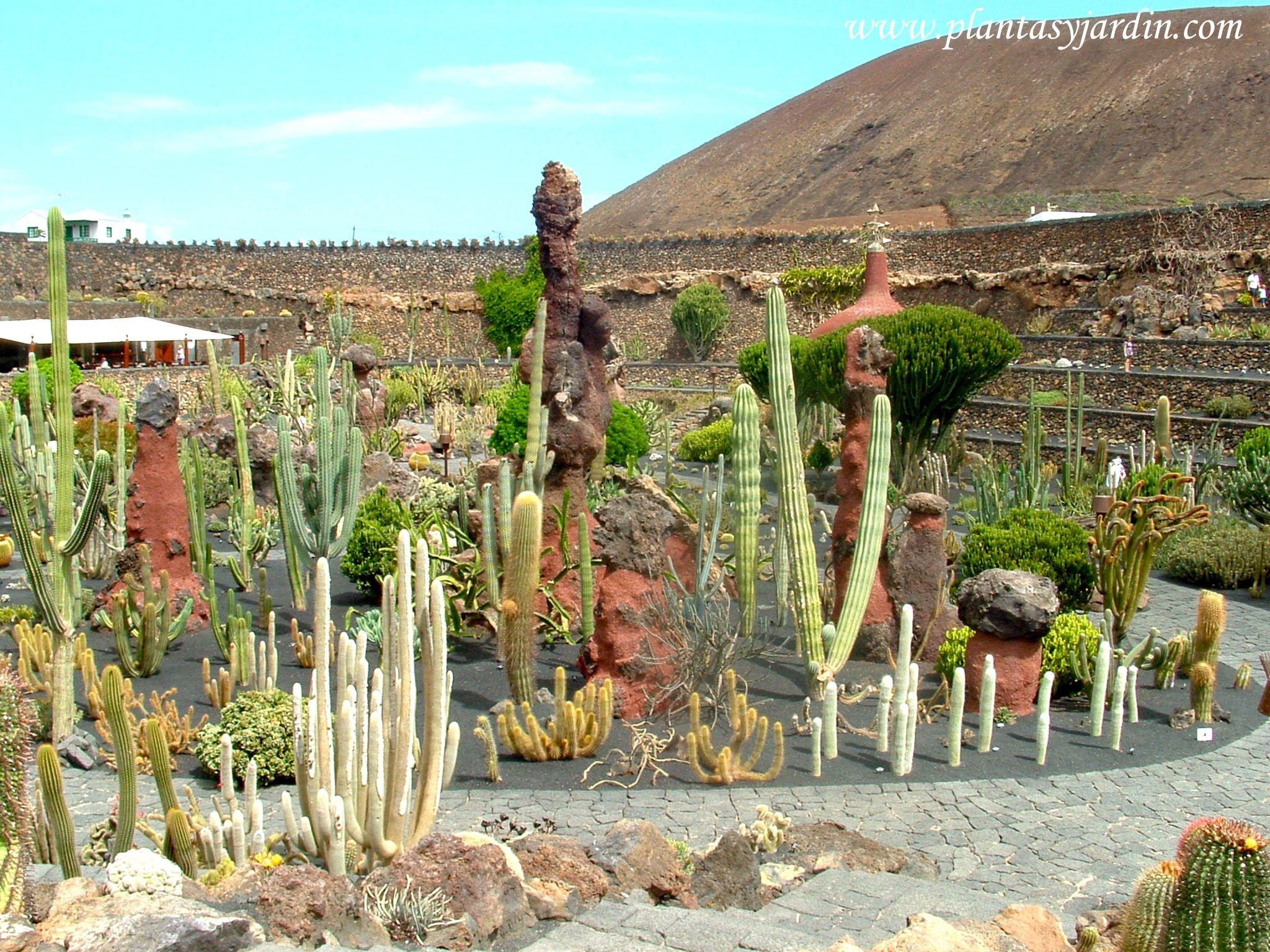 Jard n de cactus crasas creaci n del artista for Jardines con cactus