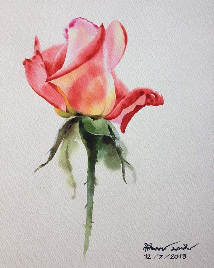 Love Rose Painting Flowers Roses Watercolorstyle