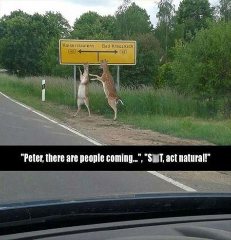 Peter is Caught Like a Deer in the Headlights #cuteanimalphotos