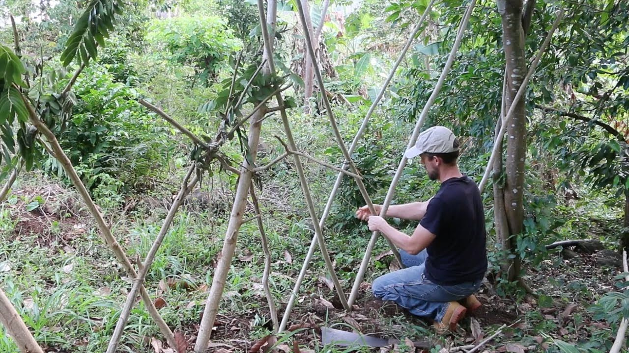 Constructing a living fence living fence farm gardens